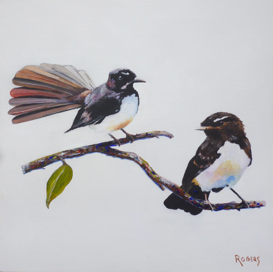Willy Wagtails - Male and female